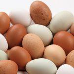 svjeza jaja